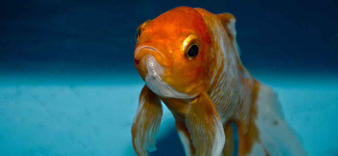 Your clients' attention span is shorter than that of a goldfish!